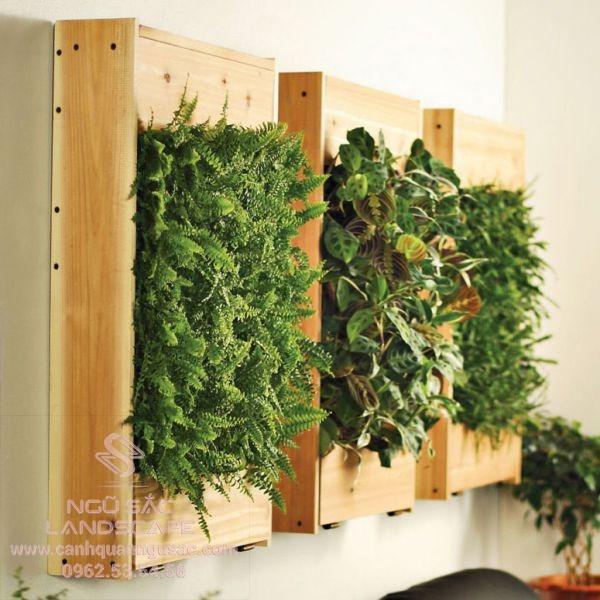 Khung trồng tranh cây gỗ